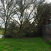 The first fallen tree in Albiani Park, right as you come into the gate on Grove St. Good thing there was a chain link fence.