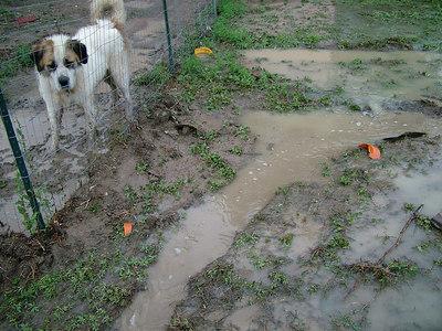 River + Dog
