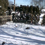 Last Snow Fall, Not this One!  10 Feb 10