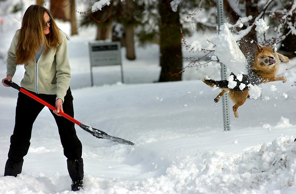 Rosie jumps for snow as Monique Cole shovels out a parking spot for arriving out-of-town relatives. <br /> Photo by Paul Aiken / The Daily Camera