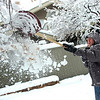 Mark Meyer knocks snow off the limbs of trees in his yard in Boulder on Wednesday March 24. Meyer lost one large limb off a tree but prevented more damage by knocking snow off the trees yesterday during the storm.<br /> Photo by Paul Aiken / The Daily Camera