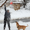 Spring Snow44.JPG Beth Cohen shakes a dog toy out of a tree as her dog Wiley waits in North Boulder Park on Wednesday March 24th, 2010.<br /> Cliff Grassmick / March 24, 2010