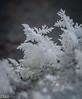 Frost, Birdbath