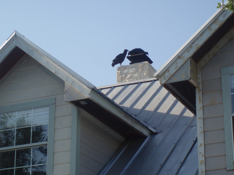 Second photo of creepy ominous buzzards unscrewing the bolts holding the cowl down to the chimney.