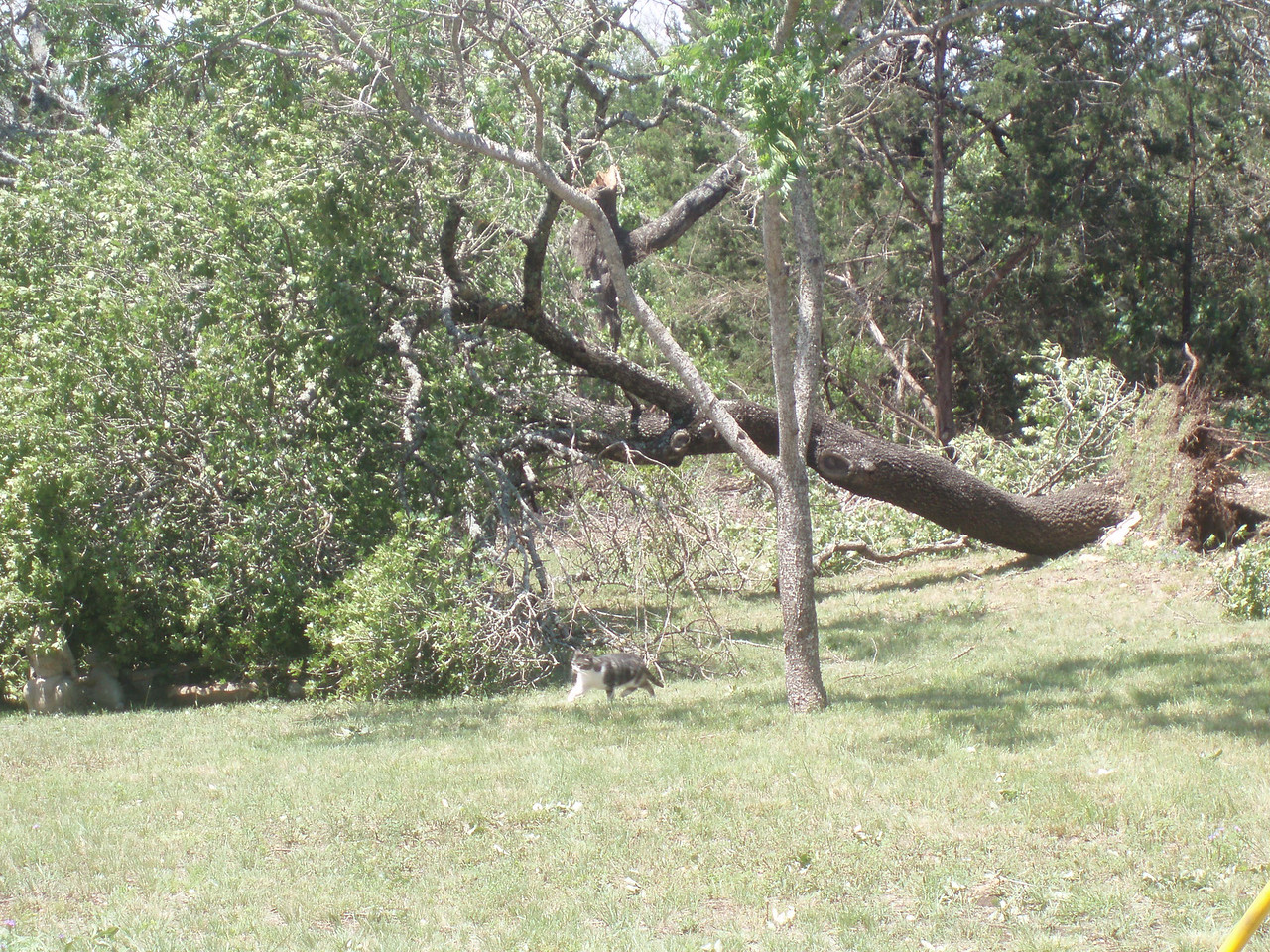 """From this picture on, it's just tree after tree that's either completely torn out of the ground, or """"shorn"""" off about 3/4 up."""