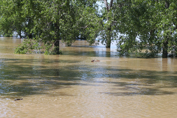 In the distance you can see a deer swimming, coming from the west to east or deep water toward shore.
