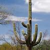 121  G Saguaro V