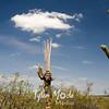 99  G Saguaros and Cloud