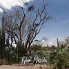 108  G Saguaro Family