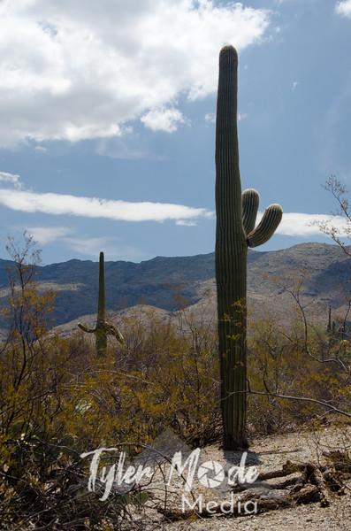 126  G Talking Saguaro V