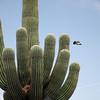 110  G Saguaro and Bird V