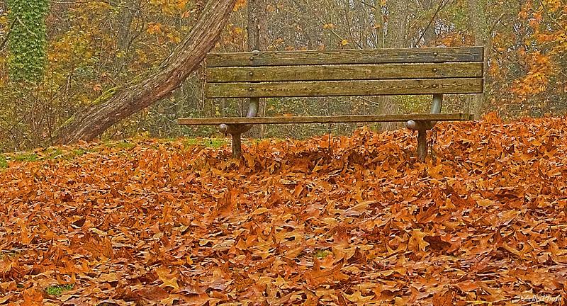 Contemplation's aid.  Arboretum, Seattle.  Best printing medium:  Premium Semi Gloss paper or Canvas.