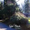 10  Tree Down