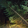 4  Fir Tree on Wires V