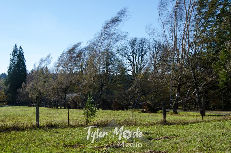 25  G Birches Wide