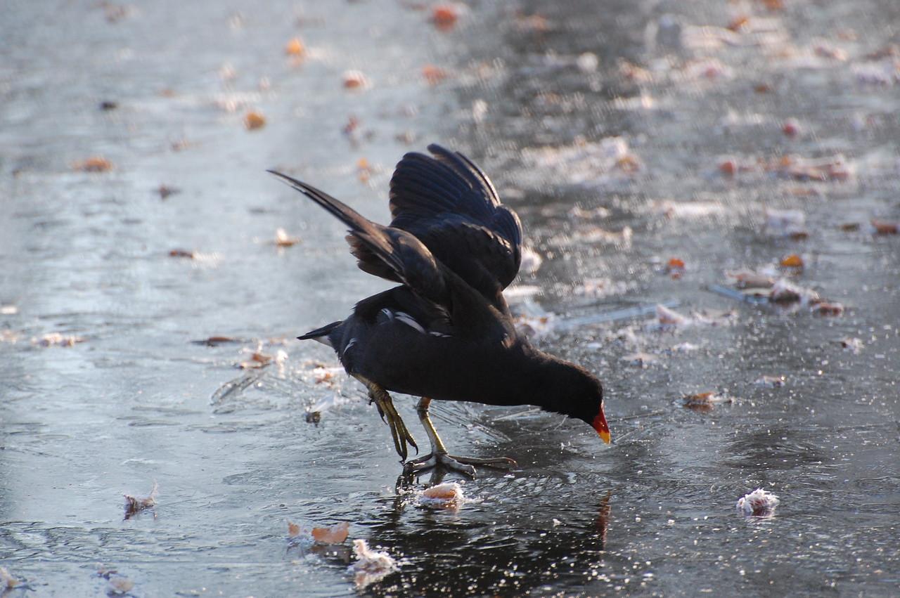 The ducks are struggling already.