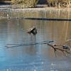 Frozen Duttons Pond November 2010