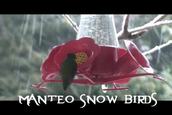 A little video. Birds were eating more during the snowfall yesterday.