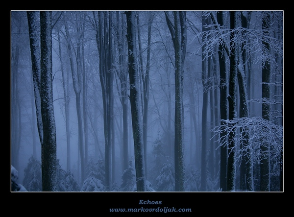 Echoes Snowy Trees