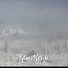 12 14 8 Paradise Fog