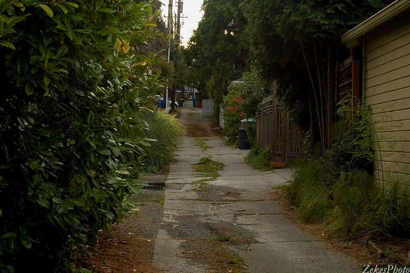Montlake alley.  Where history melds with change, leaving a broken trail to be followed.