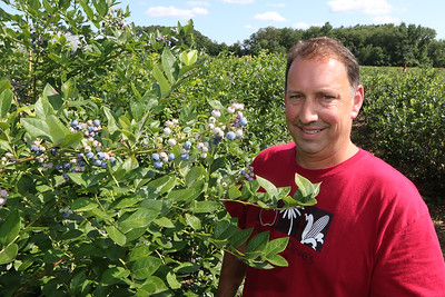 July 28, 2021 - Dave Dumaresq, owner of Farmer Dave's, at his Dracut location. The recent heavy rains have been beneficial, reducing irrigation needs and good for these blueberries.  SUN/Julia Malakie