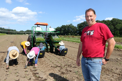 July 28, 2021 - Dave Dumaresq, owner of Farmer Dave's, at his Dracut location, with workers transplanting fennel. The tractor has a creeper gear to go very slowly, and a drum that pokes holes in the ground and adds water from the tanks. Two workers drop seedlings in the holes, and three more workers follow and cover them with soil. The recent heavy rains have been beneficial, reducing irrigation needs and filling the farm's irrigation pond. SUN/Julia Malakie