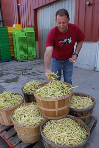 July 28, 2021 - Dave Dumaresq, owner of Farmer Dave's, at his Dracut location, with wax beans harvested earlier in the day. The recent heavy rains have been beneficial, reducing irrigation needs and filling the irrigation pond.  SUN/Julia Malakie