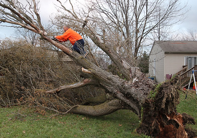 Mike Lubert, of Elyria, uses a hand saw to cut off limbs of a willow tree that fell against his mother-in-law's house on Morgan Court in Pheasant Run, LaGrange Township. BRUCE BISHOP/CHRONICLE