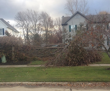 A tree is down in North Ridgeville on Monday afternoon. COURTESY