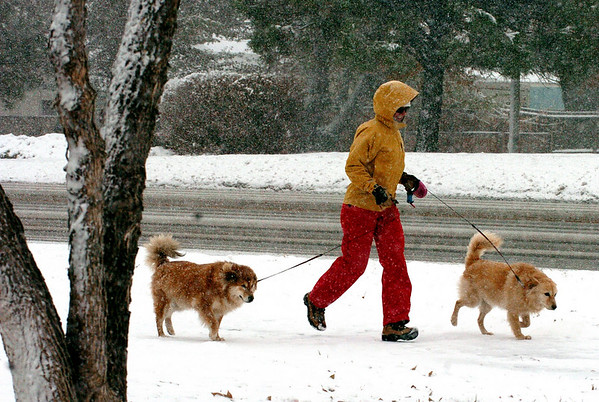 MaryDell Joyner, visiting from West Virginia, walks her dogs, Thelma, left, and Louise, near the Boulder County Fairgrounds in Longmont on Wednesday.<br /> Cliff Grassmick / October 29, 2009