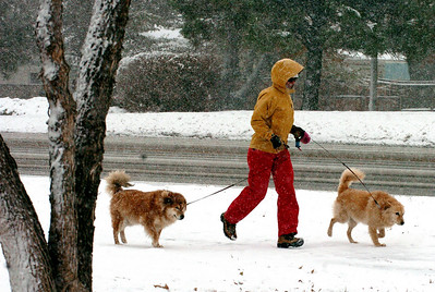 MaryDell Joyner, visiting from West Virginia, walks her dogs, Thelma, left, and Louise, near the Boulder County Fairgrounds in Longmont on Wednesday. Cliff Grassmick / October 29, 2009