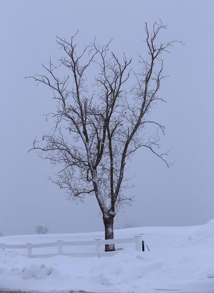 Saturday snow 021514
