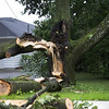 Tree hit by Lightning?