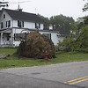 Uprooted tree - possible tornado damage?