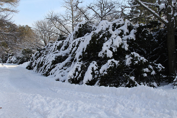 Snow 2-27-11