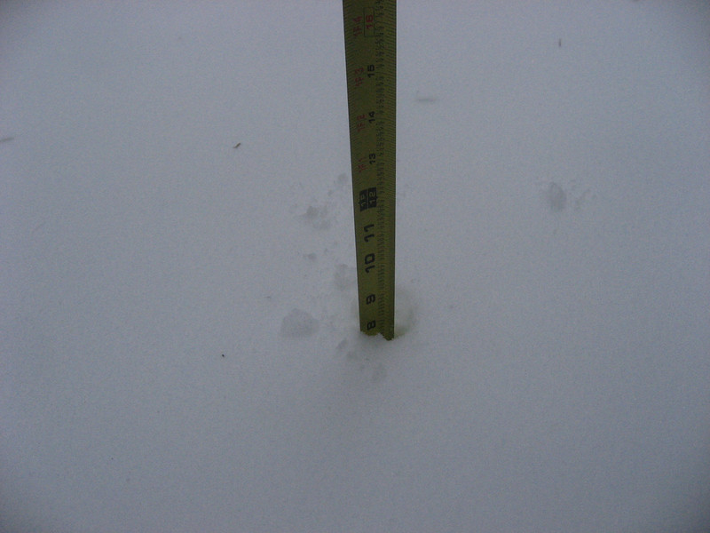"Snow depth on the back deck.  8"".  It's actually quite a bit more, but that's all the farther I could reach."