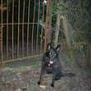 Guarding the entrance to the secret garden