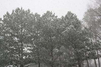 Snow Showers - 2009
