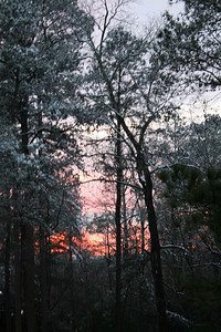 Sun setting with snow covered trees.