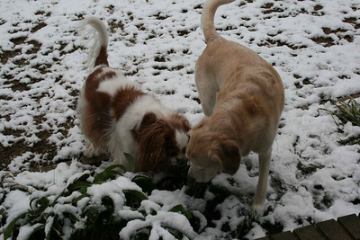 Auburn and Jasmine checking out snow.