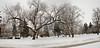 Snow (33)