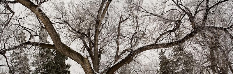 Snow (31)