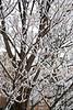 Snow (34)