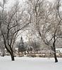 Snow (25)