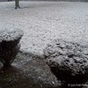 """""""Snow in March!?!?"""" 2008"""