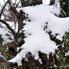 January 10, 2011<br /> <br /> Another Day of SNOW!!<br /> (tree in front yard)