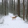 Dex in the snow Chesapeake Arboretum