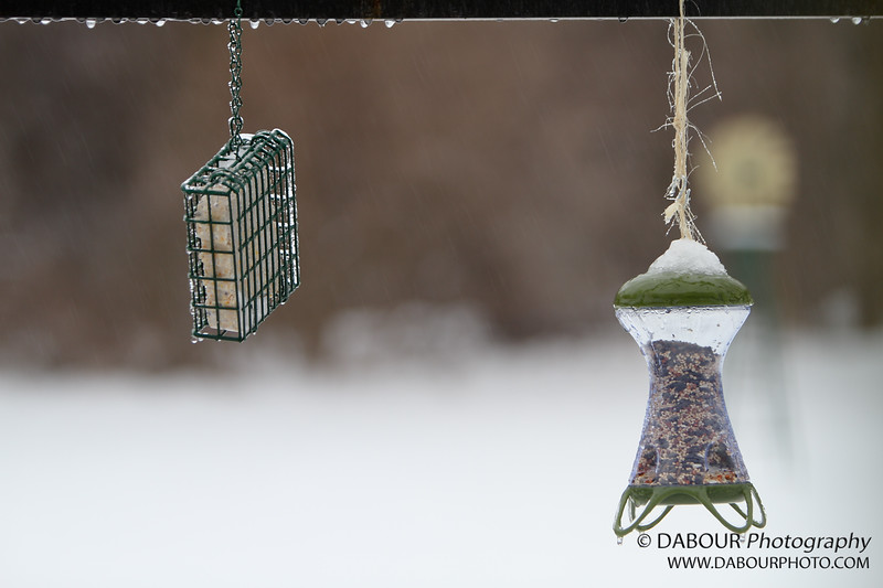 Hopefully the birds won't mind their bird seed in slushy format