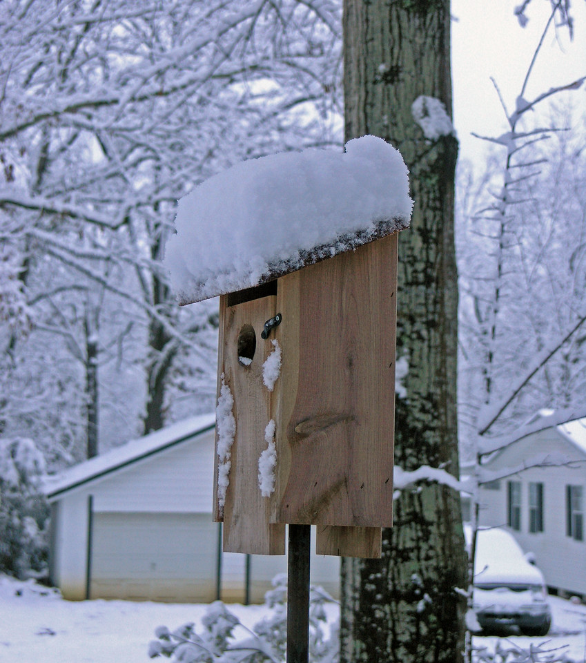Feb 12.  Gmom's bluebird house.